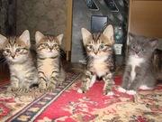 Домашние котята ищут дом